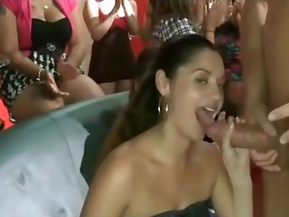 Two stripers equally dicks
